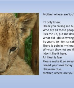 """""""Mother, where are you"""". Sarah Dyer. United Kingdom"""