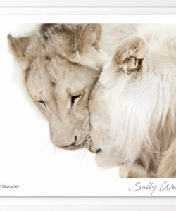 Sally Wellbeloved. South Africa