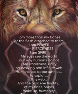 """""""800 Lions"""" by Kitty Harvill. Brazil"""