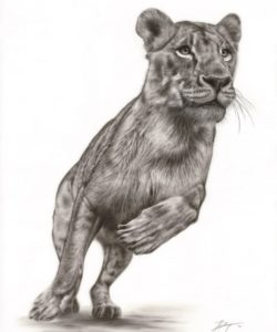 """""""Formidable"""". Fiona Goldthorpe. South Africa"""
