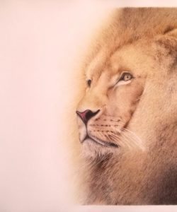 """""""Long life to the lion"""". Diego Cuttini. Italy"""